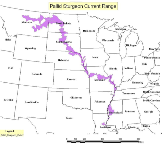 Map of Pallid Sturgeon Range